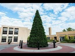 Vickerman Christmas Tree Topper by Vickerman Christmas Tree Lighting In Anoka Mn Youtube