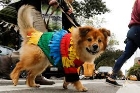 Tompkins Square Halloween Dog Parade by It U0027s Howl O Ween Dogs Of New York Flaunt Costumes In 26th Annual