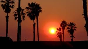 A Sunset Behind Palm Trees Along California Beach