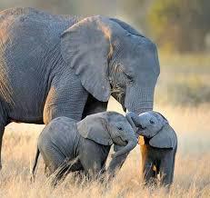 Die 17 besten Bilder zu Wild animals auf Pinterest