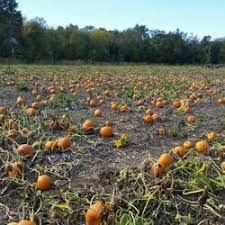 Maryland Pumpkin Patches Near Baltimore rodgers farms 10 reviews farmers market 1818 greenspring