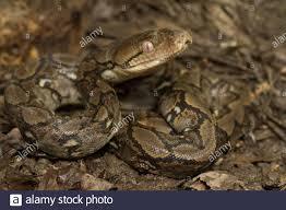 bali reptilien stockfotos und bilder kaufen alamy