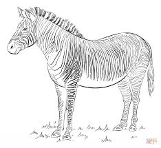 Click The Zebra Coloring Pages