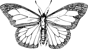 Butterfly 37 Black White Line Art Drawing Scalable Vector Graphics SVG Inkscape Adobe Illustrator Clip Clipart Coloring Book Colouring 999px