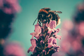 understanding bees and how to attract them in your garden