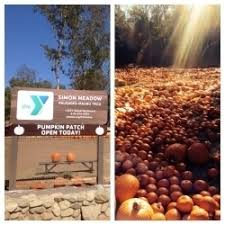 Nearby Pumpkin Patches by Palisades Malibu Ymca Pumpkin Patch In Pacific Palisades Ca