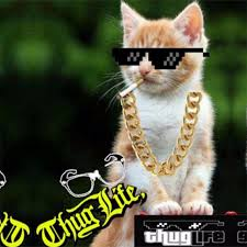 thug cat aliexpress buy yooske thug glasses hats necklace deal