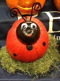 Pinterest Pumpkin Carving Drill by Ladybug Pumpkin Pumpkin Decorating Halloween Pumpkin Carving