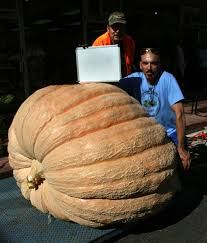 Heaviest Pumpkin Ever by Old Colorado City Has Its Biggest Giant Pumpkin Ever In 11th