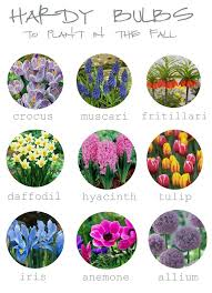 100 best gardening planting bulbs images on flower