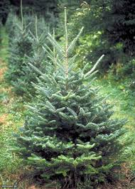 Artificial Layered Noble Fir Christmas Tree by Best Living Christmas Tree Types Hgtv