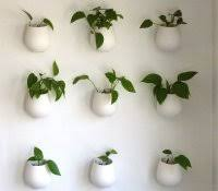 Plants In Bathroom Feng Shui by Peace Lily Bathroom Indoor Plants Amazon India Orchid In Feng Shui