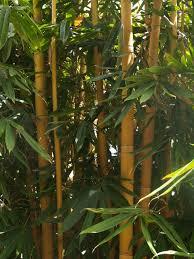 100 Bali Garden Ideas Horticulture Stock PhotosImagesArticlesFree Photos For