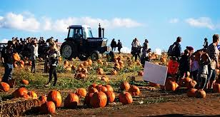 Tims Pumpkin Patch by Top 10 Family Events In Pittsburgh This October