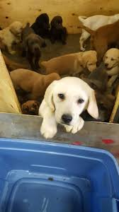 New York Police Rescue More Than 100 Puppies From Overturned Truck ... Nyc Aspca New York City November 14 2015 Stock Photo 100 Legal Protection Looking Back At 2017 A Remarkable Year For Animals And The Animal Health More In Our Hands Rescue Ways To Give Donate Charitable Ctributions Orange Car Seat Cover Dogs Walmartcom Stellas Spay Day With Mobile Spayneuter Clinic Youtube These Oldtimey Photos Hlight 150 Years Of The Saving Grants American Society Prevention Of Cruelty Aspca Hashtag On Twitter