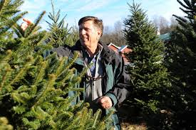 Xmas Tree Farms Albany Ny by Branching Out For Christmas Times Union