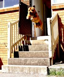 Dog leaping out the front door X post from r pics photoshopbattles