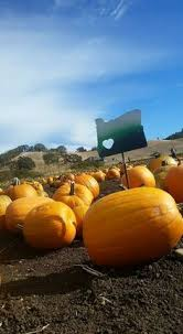 Pumpkin Patch Medford Oregon 2015 by Pin By Heidi Barry On Ucc Strong Pinterest