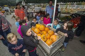 Pumpkin Picking Nj by Merriam Avenue Pumpkin Picking New Jersey Herald