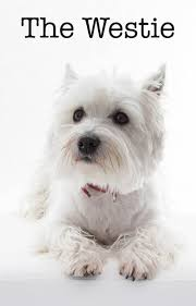 Do Pugs And Puggles Shed by The Westie A Complete Guide To The West Highland White Terrier