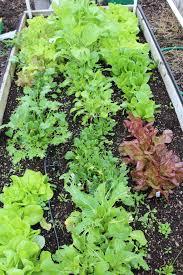 Get It Growing Short season fall ve able gardening