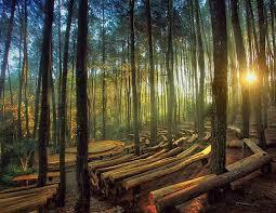 Hutan Pinus Imogiri Pesona Alam Jogja
