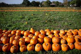 Pumpkin Patches Near Temple Texas by Autumn Fun Here Are 16 Places To Find It Around Dc Wtop