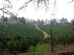Santa Cruz Summit Christmas Tree Farm by Pedal Damn It Skyline Boulevard Ride Part I