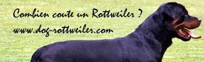 coute un rottweiler le prix du rottweiler