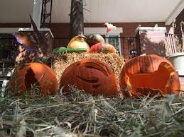 Pumpkin Contest Winners 2015 by There U0027s Still Time To Enter 2015 Pumpkin Carving Contest Advice