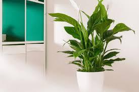 4 wunderbare pflanzen fürs bad bathspiration