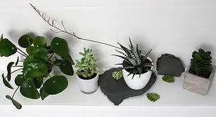 mit grünpflanzen zum perfekten jungle look im badezimmer