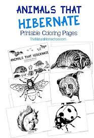 Animals That Hibernate In Winter Printable Coloring Book