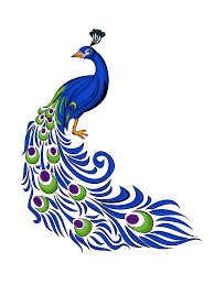 Peacock Feather Vector Free Graphics And Art
