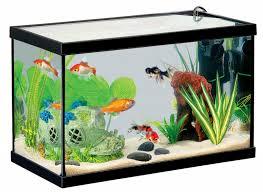 aquarium poisson prix botanic aquarium prix