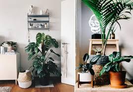 shoppe den dschungel look für dein zuhause wohnklamotte