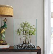 mit pflanzen dekorieren zimmerpflanzen pflanzen topfblumen