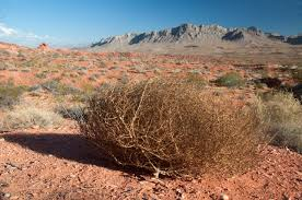 Tumbleweed Christmas Tree Pictures by Tumbleweed Or Tree From The Inside Out
