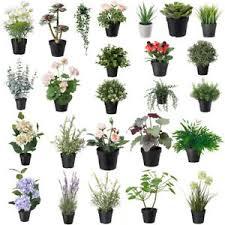 ikea deko blumen künstliche pflanzen fürs wohnzimmer