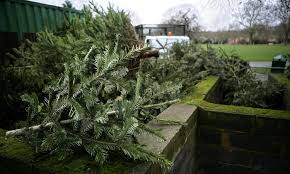 Nyc Christmas Tree Recycling 2016 by Guide To Recycling Christmas Trees In Seattle Cbs Seattle