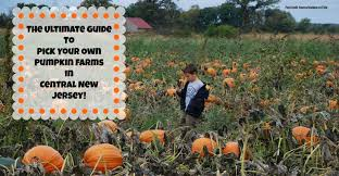 Chesterfield Pumpkin Patch 2015 by The Complete Guide To Pick Your Own Pumpkin Farms In Central New
