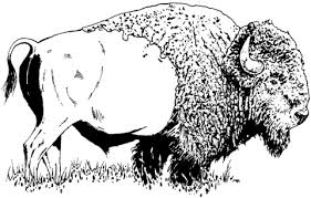 Click To See Printable Version Of Bison American Buffalo Coloring Page