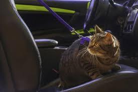 odeur de pipi de sur canapé enlever l odeur d urine de de sa voiture