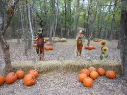 Pumpkin Patches Near Dallas Tx 2015 by Blase Family Farm Pumpkin Patch Opens In Rockwall Blue Ribbon News