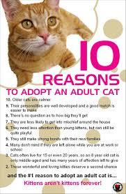 adopt a cat casa camano animal shelter association