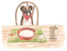 Pumpkin For Pets Diarrhea by 3 Ways To Make A Healing Mash For Dogs With Diarrhea U0026 Gas