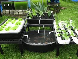 Backyard Aquaponics Youtube