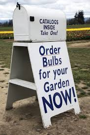 flower bulb suppliers tips on buying bulbs or mail order