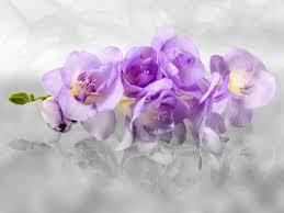 xl fototapete tapete orchideen blumen blüten 3d