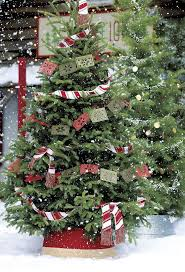 Christmas Tree Saplings For Sale by 115 Best Christmas Tree Farm Images On Pinterest Christmas